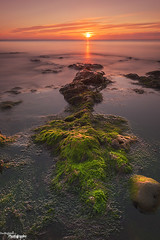 It Came From The Deep (Dave Brightwell) Tags: light seascape seaweed sunrise canon coast rocks coastal hitech redsnapper seaham countydurham chemicalbeach bwnd davebrightwell