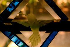 Hummer suncatcher (tommaync) Tags: glass oneaday nc nikon hummingbird september suncatcher photoaday hummer pittsboro pictureaday d40 digitalcameraclub project365 2013 project365241 project365090313