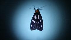 Illuminated Moth (niramay joshi) Tags: sony cybershot dsc s3000 niramay dscs3000 niramayjoshi