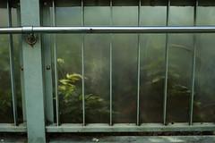 EPSN1345 (anchor recess) Tags: plant kyoto 京都 植物