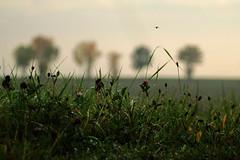 nach dem Regen (gutlaunefotos ☮) Tags: natur gras regen