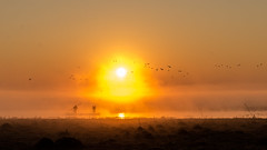 Sunrise@Bangweulu Wetlands (Wim Storme) Tags: