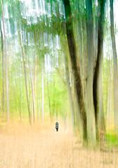 Fontainebleau (@lain G) Tags: france nature automne foret iledefrance fontainebleau saisons rochers minral seinemarne