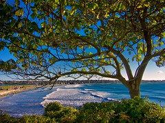 View through a tree cliché (Timothy Valentine) Tags: ocean tree surf large cliffwalk 1013 newportri clichésaturday