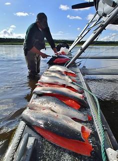 Alaska Fly-out Fishing Lodge 35