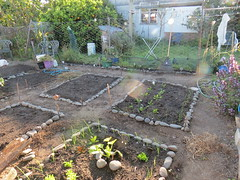 New Spring Planting (Hesterb) Tags: spring beds organic vegetablegarden