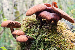 Atop the Stump (Zane's Photography) Tags: oregon woods beaverton fungus stump pacificnorthwest tualatinhillsnaturepark niksoftware exposure5 alienskinsoftware nikond800 colourefexpro4 55mmmicronikkorpf35