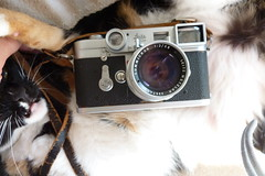 Leica M3 Dual Range Summicron (SFPressPhotos/DavidToshiyuki) Tags: cat soft case chrome leicam3 dualrange50mmsummicron