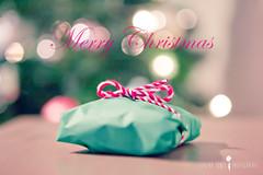 Merry Christmas (Serena178) Tags: christmas macro bokeh pastel present merrychristmas macromonday