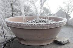 frosty (peter pirker) Tags: winter canon austria sterreich frost frosty krnten carinthia reif schale seeboden peterfoto terakotta eos550d peterpirker