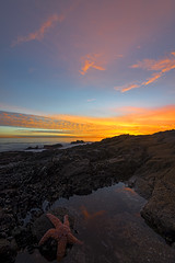 """Star Light Star Bright"" (Matt Austin Photography) Tags: ocean sunset seascape beach landscape starfish laguna orangecounty tidepools tidepool lagunabeach seastar"