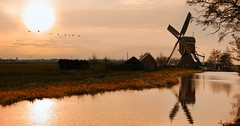 The characteristic hollow post mill Vrouw Venne in the typical Dutch landscape (Bn) Tags: holland geese hans goose ganzen topf300 line polder topf100 vrouw topf200 zuid windmolen molenaar leidseweg vformation venne 17e eeuw 100faves oudade 200faves poldermolen 300faves wipmolen lippens vennemolen scheprad molenstichting kaagenbraassem rijnlandse vrouwvennepolder akkerslootpolder