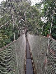 Canopy walk #4 (larigan.) Tags: bridge trees peru southamerica amazon rainforest treetops walkway jungle recreation activity explorama canopywalk larigan phamilton iphone4s
