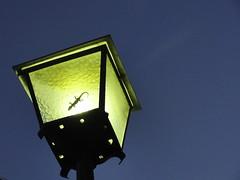 The magic lizard (drewturquoise) Tags: light night spain streetlight lizard paranoid cdiz