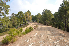 Margalla Pharila (Asif Saeed [....DOCUMENTING PAKISTAN...]) Tags: travel camping pakistan sky mountains nature pine forest trekking landscape hiking hills islamabad margalla landscapephotography pakistanlandscape travelinginpakistan asifsaeed arsalanmirza pharila