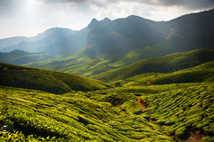 Kolukkumalai Tea Estate, Munnar, India (CamelKW) Tags: india tea kerala plantation teaplantation munnar kolukkumalai kolukkumalaiteaestate highestteaplantationintheworld