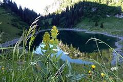 Morgen am Walopsee; Die Nssliflueh spiegelt sich im See (HITSCHKO) Tags: schweiz switzerland suisse bern svizzera bergsee spiegelung berneroberland simmental walop boltigen svizra berneralpen simme vision:mountain=0526 vision:plant=0525 vision:outdoor=0929 keltenalp