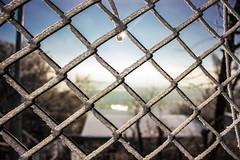 Frozen Fence (marius_lehr) Tags: blue schnee winter sky sun snow ice water sunshine fence frozen crystal bokeh squares kitlens zaun eis gefroren eiskristalle bokehlicious