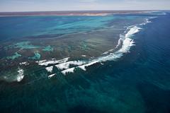 WA Coral Bay - 4619
