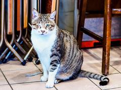 () Tags: cat cafe takumar bokeh olympus 55mm f18 18 55   omd em1    m43  supertakumar55mmf18   micro43 microfourthirds   olympusem1