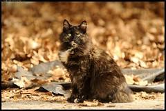 DSC_8751-04-10-p - gatto (r.zap) Tags: gatto parcodelticino rzap