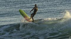 Surfing Burleigh #335 (BAN - photography) Tags: surfer wave malibu surfboard d500 burleigh seaocean