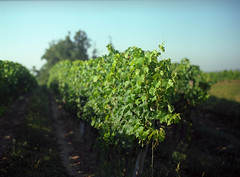 Bordeaux (RunnyInHongKong) Tags: france film mediumformat bordeaux 6x45 kodakportra160vc mamiya645protl nikoncoolscan9000 mamiyasekor80mmf19 nikonscan41
