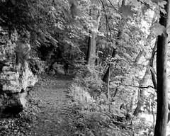 Trail (joeldinda) Tags: people blackandwhite bw tree monochrome person nikon michigan may parks trail shadowplay grandriver lightandshadow v2 grandledge 2016 ledgestrail eatoncounty 3137 1v2 nikon1v2