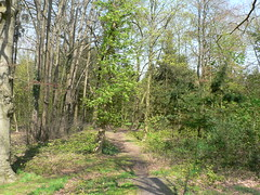 spring forest - East Frisia (achatphoenix) Tags: trees forest spring woods may arbres ostfriesland wald bume friesland fort frhling eastfrisia