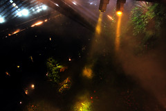 Cloud Forest (Jimmy Colburn) Tags: trees plants cloud mist fog gardens by forest lights bay singapore