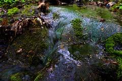 DSC03230 (Kyle Becker) Tags: moss cascade