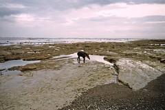 untitled. (rwed) Tags: travel film costarica corcovado drake yashica tapir baha drakebay