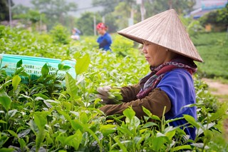thai nguyen - vietnam 3