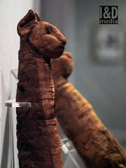 mcat1 (Internet & Digital) Tags: mummy mummified cats ibis victorian mummifiedcats thoth hawk sacrifice ritual ancient ancientegypt offerings god isis horus osirus egypt giftstothegods exhibition animalmummycatmummygiftstothegodsexhibitionglasgowkelvingrovemuseummummifiedcatsancientegyptegyptcroccodilecatheadibisvictoriansacrificeritualancientofferingsgodc21troyidmedia