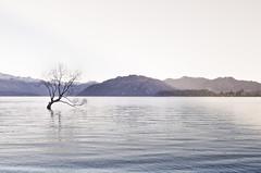 (Bronte Lockwood) Tags: new travel trees sunset sky mountain lake tree bird water beautiful landscape nikon holidays zealand nz otago queenstown hippie pure wanaka lovewanaka