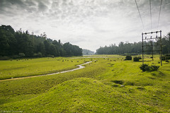 Ooty (anandgovindan) Tags: anandgovindan anandgoviphotography landscape nature green hills ooty tamilnadu india grazing hillstation nilgiris peace serene carpet stream ultrawideangle wideangle tokina1116mm canon canon600d incredibleindia travel westernghats valley