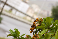 A bush in the way (tabatabaie_ehsan) Tags: flower green nature beautiful canon way iran live tehran 50d