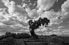 Lonely juniper tree - dead horse point, Utah (Guillaume DELEBARRE) Tags: usa tree canon utah alone desert cloudy deadhorsepoint lonely juniper cloudysky 6d guillaumedelebarre tamron2470f28