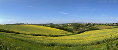 In the country (Ollie_57.. on/off) Tags: uk england panorama nature june rural canon landscape countryside spring scenery view scenic hills devon 7d fields photostitch rapeseed 2016 ef24105mm stokeinteignhead ollie57 saariysqualitypictures affinityphoto