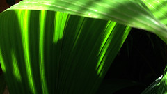 (hjjones2015) Tags: nature hojas leafs
