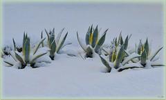 Naturaleza    (jose luis naussa ( + 1,8 k w. )) Tags: nieve invierno   lanaturaleza