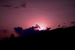 purple sunset (Sebastian Schmeinck) Tags: sun sunset light licht clouds wolken purple color sky dark dunkel hell shadow schatten abstract bird love dreamscape dream art view