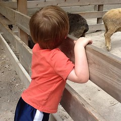 "Paul at the Petting Zoo at the Kansas City Zoo • <a style=""font-size:0.8em;"" href=""http://www.flickr.com/photos/109120354@N07/27754676782/"" target=""_blank"">View on Flickr</a>"