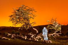 El fantasmn (DRGfoto) Tags: arbol noche cielo nocturna fantasma noctambulo