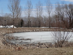 Quebec. Avenue Royale. Icy pond. (denisbin) Tags: roof house river pond quebec cottage icy maplesyrup frenchstyle adamsfamily saintlawrence chezmarie royalroad avenueroyale icypond frenchroof produitsderable