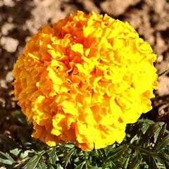 Soria_0197 (Joanbrebo) Tags: park flowers parque espaa flores fleur spain blossom blumen fiori soria parc flors autofocus castillaylen alamedadecervantes efs18135mmf3556is canoneos70d