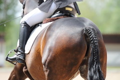 IMG_3303 (dreiwn) Tags: horse pony horseshow pferde pferd equestrian horseback reiten horseriding showjumping dressage reitturnier dressur reitsport dressyr ilsfeld dressuur ridingclub junioren ridingarena pferdesport springreiten reitplatz reitverein dressurreiten dressurpferd dressurprfung tamronsp70200f28divcusd jugentturnier