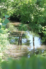 Little creek (kellycrowe46) Tags: morning trees summer water creek reflections warm