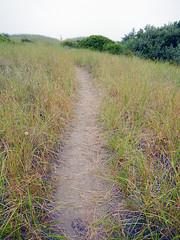 Pathway through the grasses at Ocean Shores on the Olympic Peninsula in Washington, USA (albatz) Tags: path grasses oceanshores olympicpeninsula washington usa
