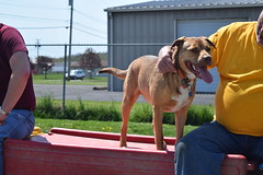 2016-05-07 10.28.23 (A Place for Paws) Tags: chance playday